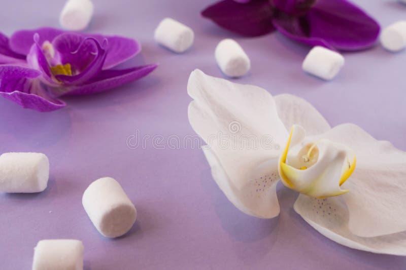 Fondo de papel violeta con las orqu?deas blancas y p?rpuras, y con las melcochas Endecha plana Lugar para el texto foto de archivo libre de regalías