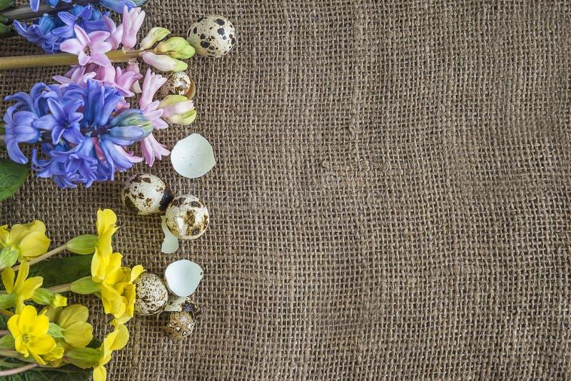 Fondo de Pascua con el marco de las flores de la primavera y de los huevos de codornices encendido foto de archivo