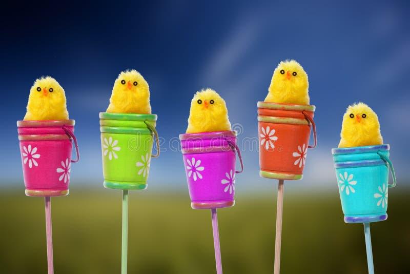 Fondo de Pascua con los polluelos amarillos del bebé imagen de archivo