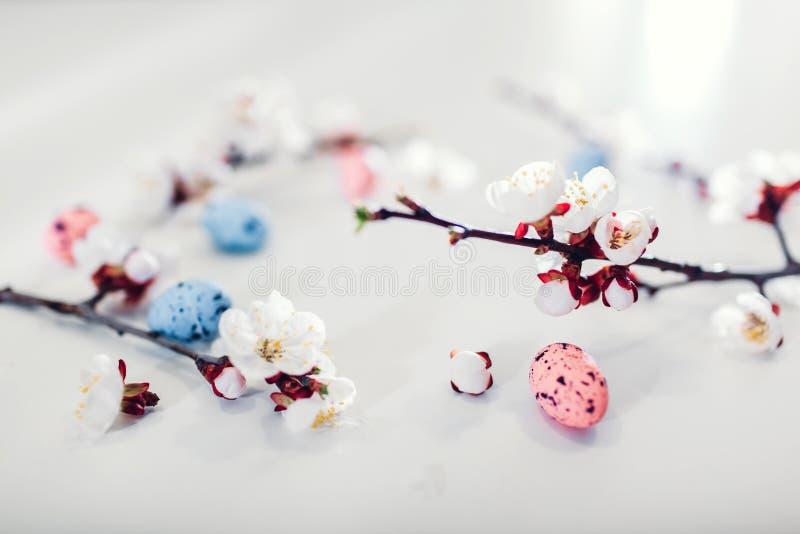 Fondo de Pascua Flor del albaricoque con los huevos de codornices Decoraci?n del d?a de fiesta de la primavera imagen de archivo
