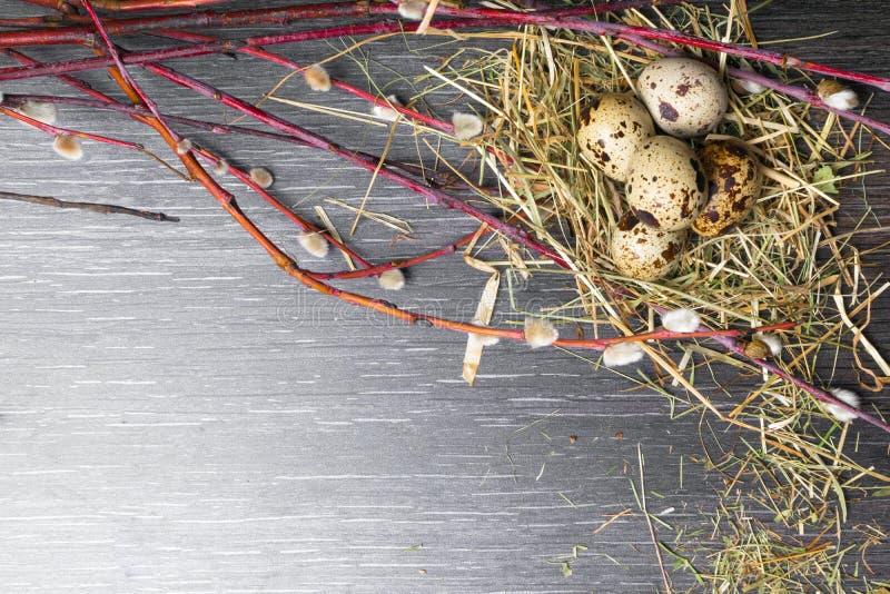 Fondo de pascua de la visión superior Huevos de codornices felices de pascua en la tabla de madera con el sauce hermoso De madera imagen de archivo