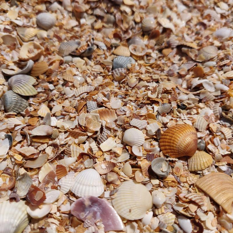 Fondo de pequeñas conchas marinas variadas imagen de archivo libre de regalías