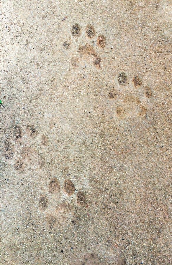 Fondo de piedra con el sello animal de la garra fotos de archivo