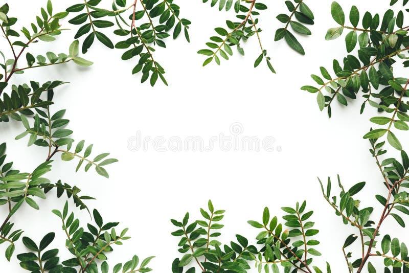 Fondo de primavera con hojas verdes de fondo blanco fotografía de archivo