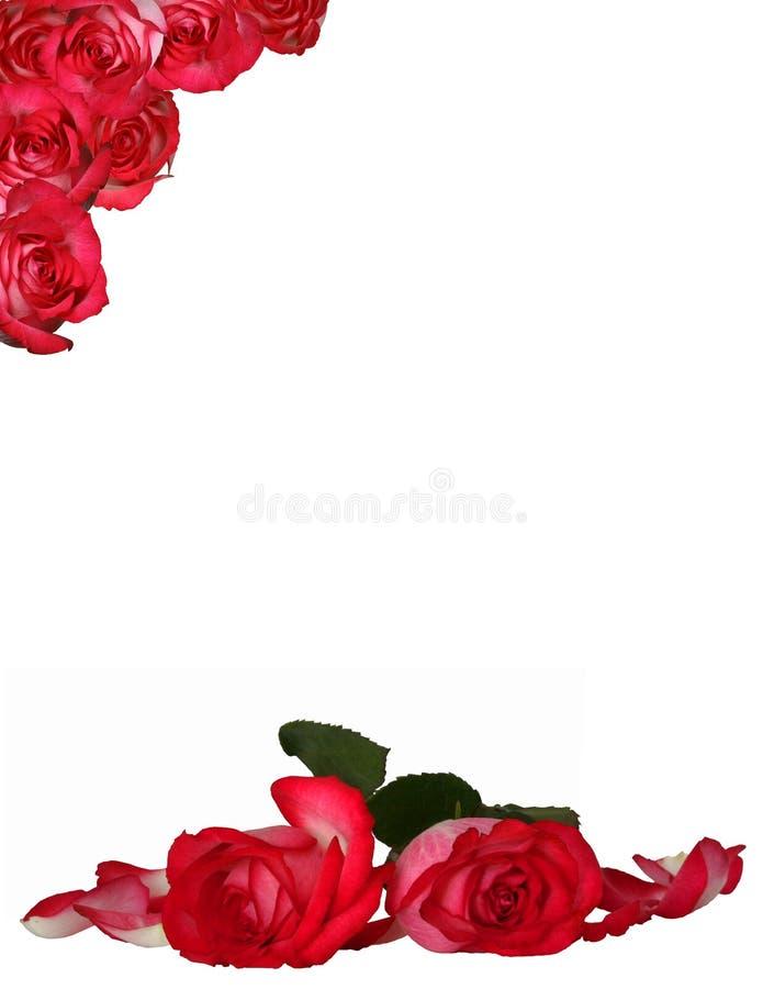 Fondo de Rose fotos de archivo libres de regalías