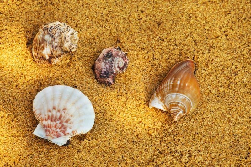 Fondo de Sunlights de la arena de la playa de la concha marina fotografía de archivo