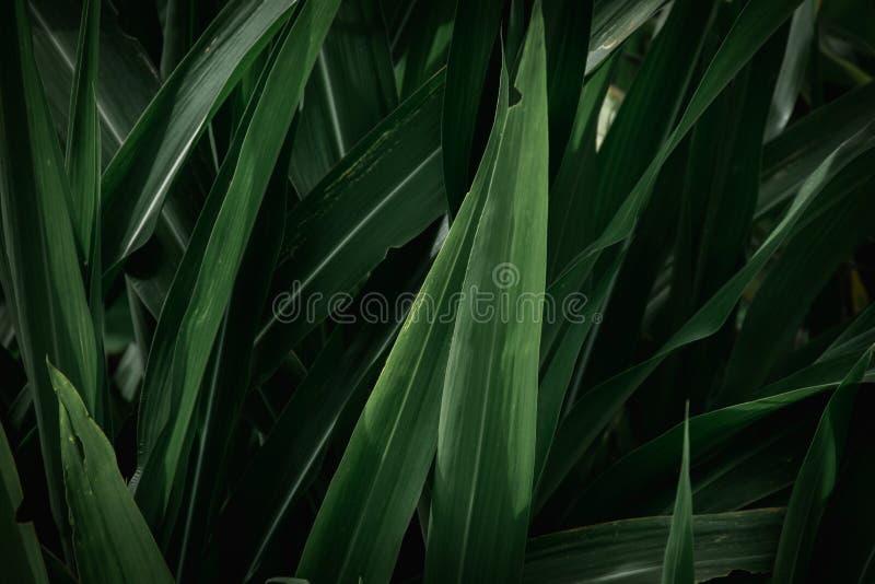 Fondo de textura de hojas verdes Marco completo de tono de hoja verde oscuro tropical fotografía de archivo libre de regalías