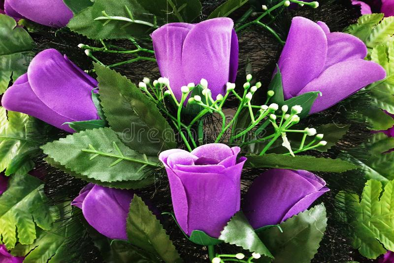 Fondo de tulipanes p?rpuras brillantes con las hojas verdes foto de archivo libre de regalías