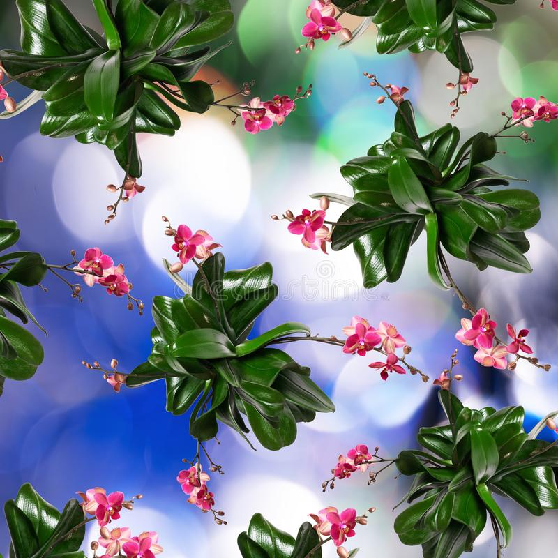 Fondo de un bokeh con un modelo de flores de orquídeas stock de ilustración
