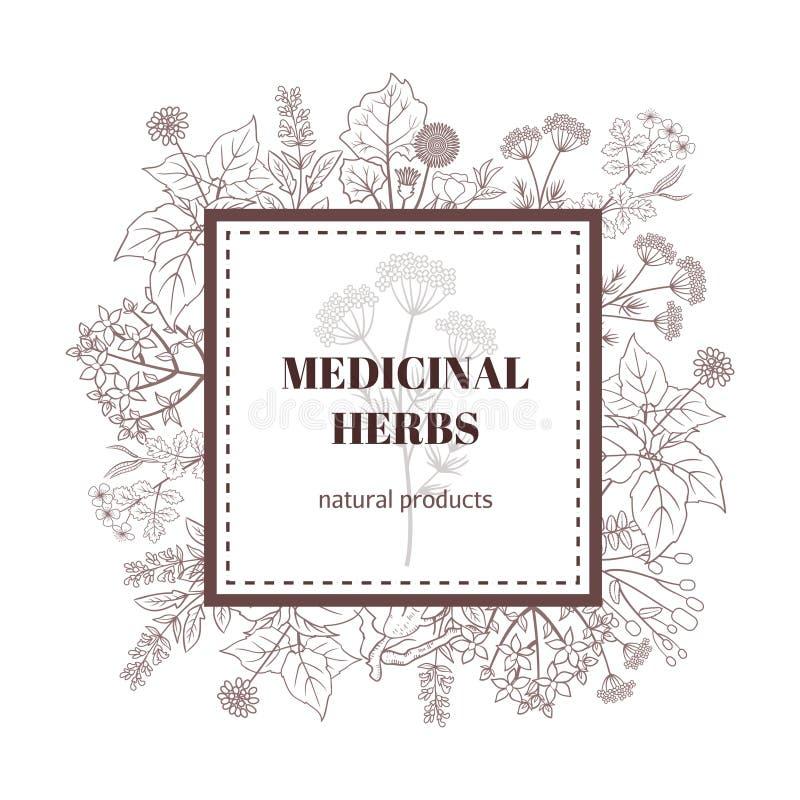 Fondo decorativo de la planta de la medicina Ejemplo botánico del vector con las hierbas dibujadas mano ilustración del vector