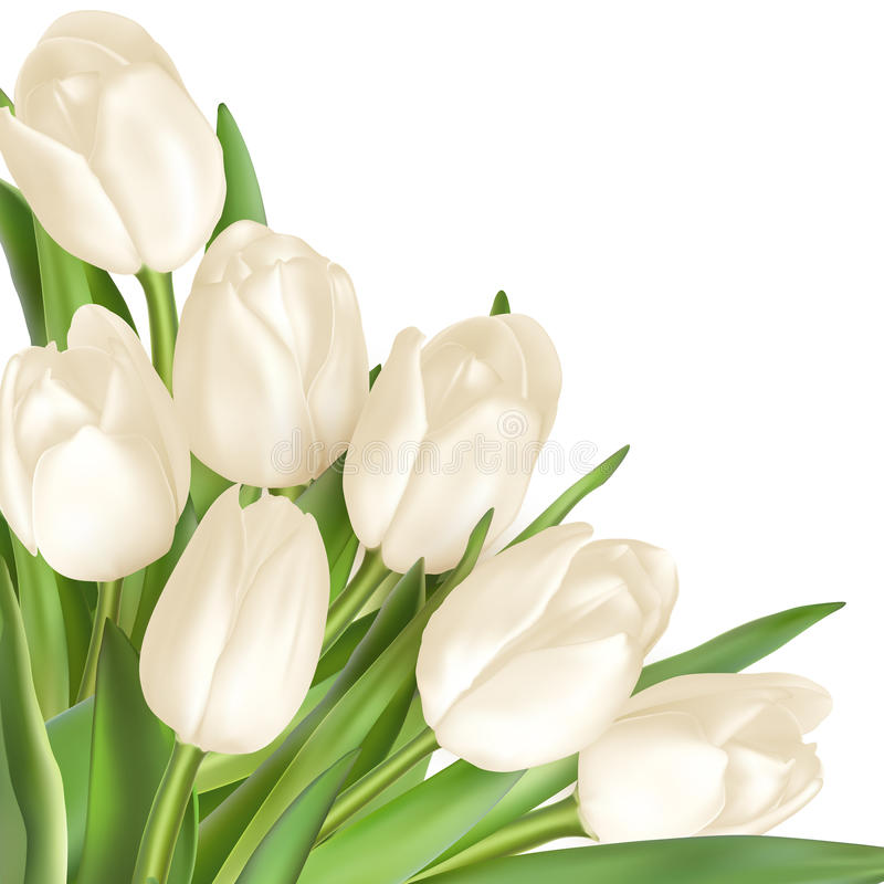 Fondo decorativo de los tulipanes EPS 10 ilustración del vector
