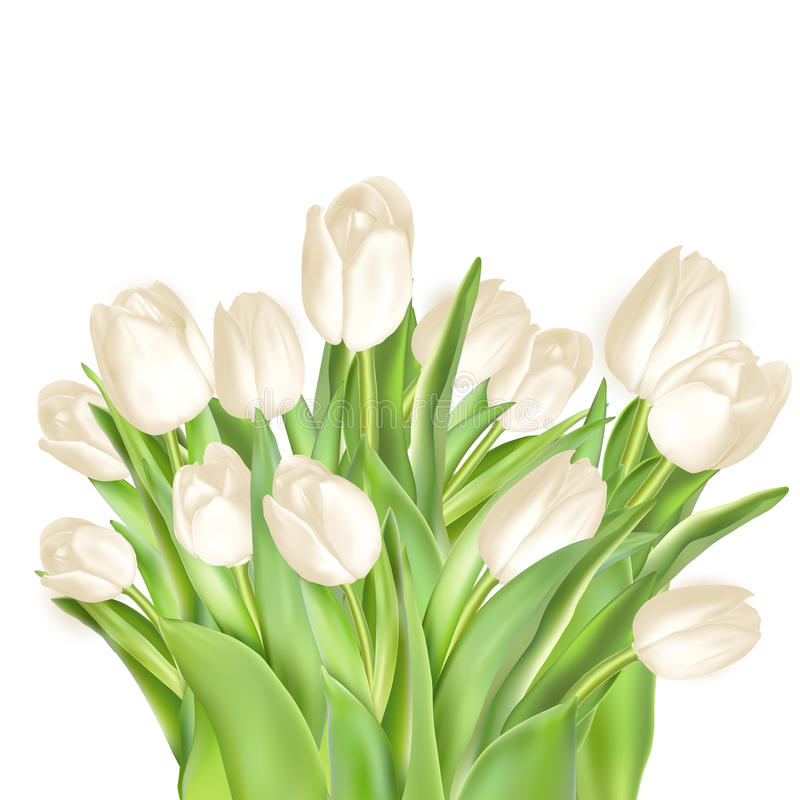 Fondo decorativo de los tulipanes EPS 10 libre illustration