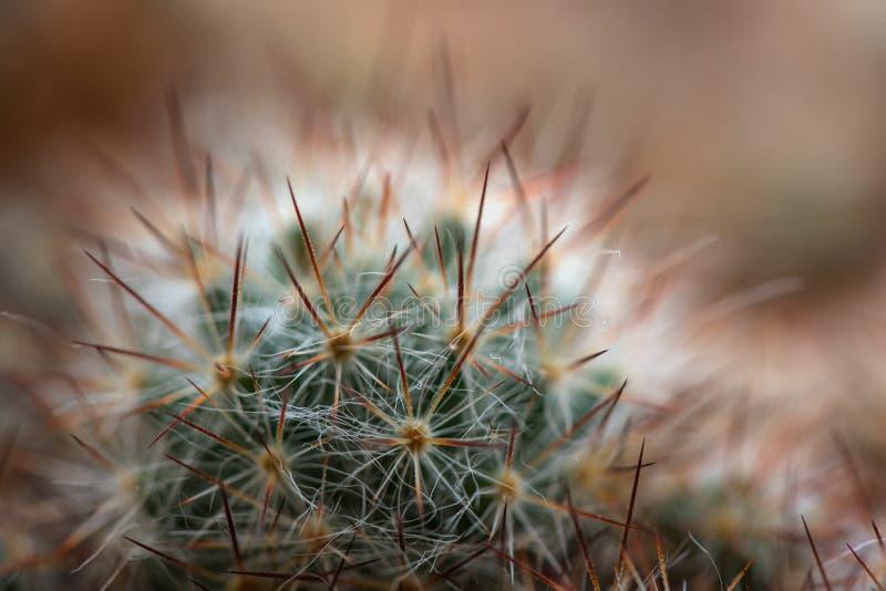 Fondo degli aghi del cactus fotografia stock