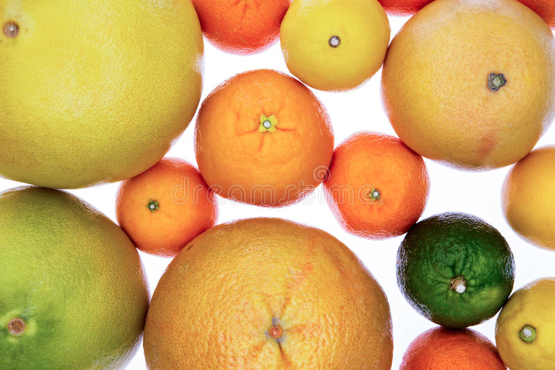 Fondo degli agrumi assortiti su bianco fotografia stock