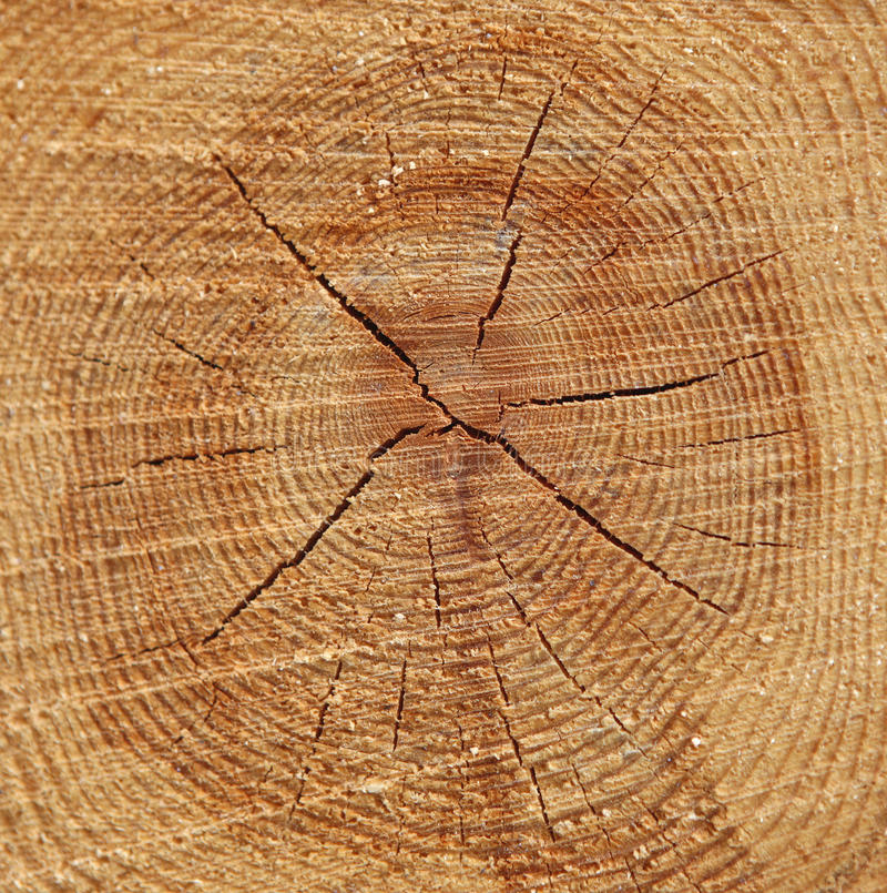 Fondo degli anelli di albero di legno di pino fotografie stock libere da diritti