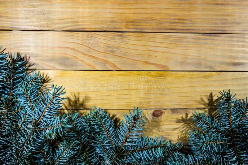 Fondo dei bordi bruciacchiati del pino, con i rami attillati blu fotografia stock libera da diritti