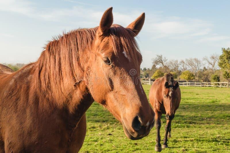 Fondo dei cavalli Atmosfera dell'azienda agricola e rurale fotografia stock libera da diritti