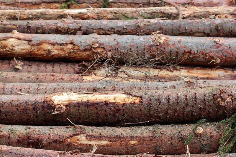 Fondo dei ceppi degli alberi impilati orizzontalmente sopra a vicenda Abbattimento dell'albero nel legno Repubblica ceca immagine stock libera da diritti