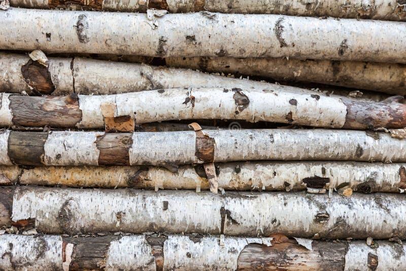 Fondo dei ceppi della betulla fotografie stock