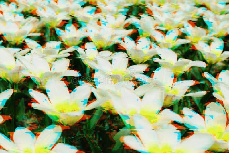 Fondo dei fiori nell'effetto di impulso errato fotografia stock libera da diritti