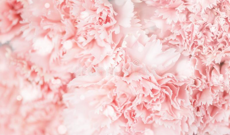 Fondo dei fiori rosa dei garofani fotografie stock