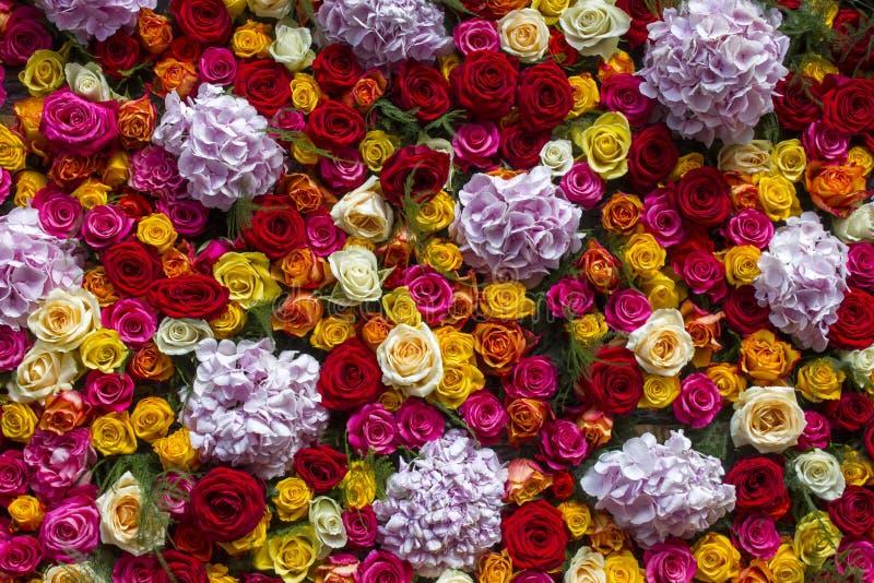 Fondo dei fiori - rose e fiori di hortensia immagine stock