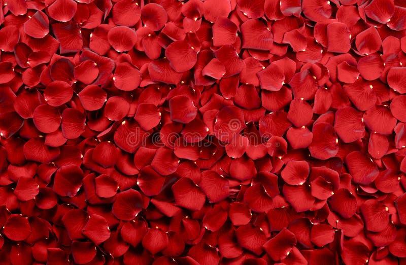Fondo dei petali di rosa rossa immagine stock