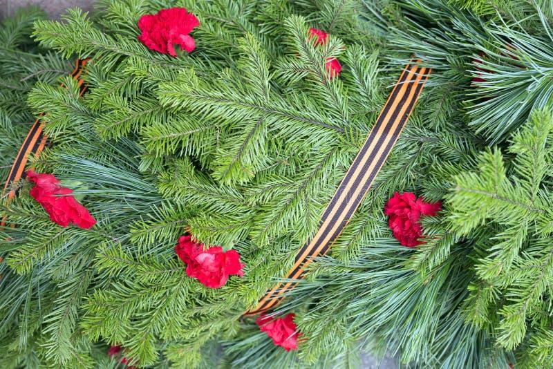 Fondo dei rami della conifera con i fiori dei garofani e del nastro di St George fotografia stock libera da diritti