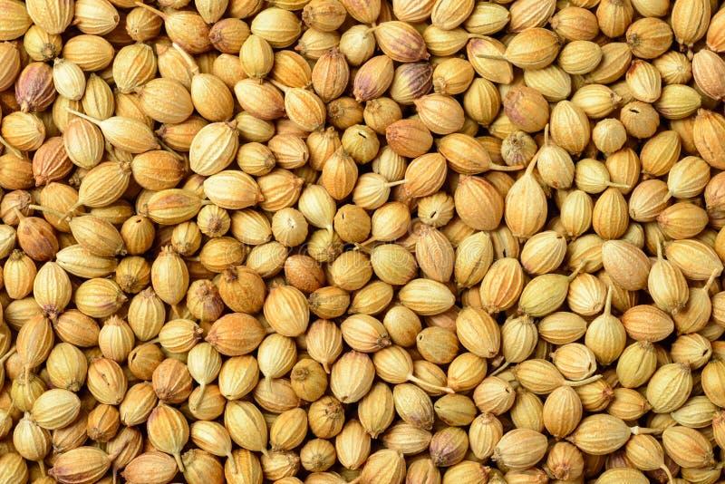 Fondo dei semi di coriandolo secchi, vista superiore dell'alimento immagini stock
