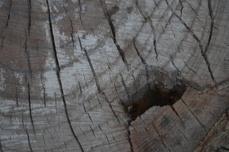 Fondo del árbol del tocón imagenes de archivo