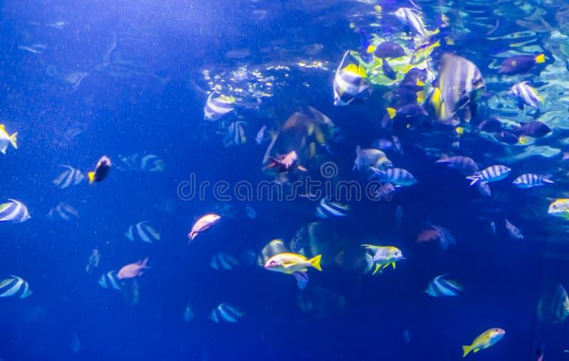 Fondo del acuario con muchas diversas especies tropicales de los pescados foto de archivo libre de regalías