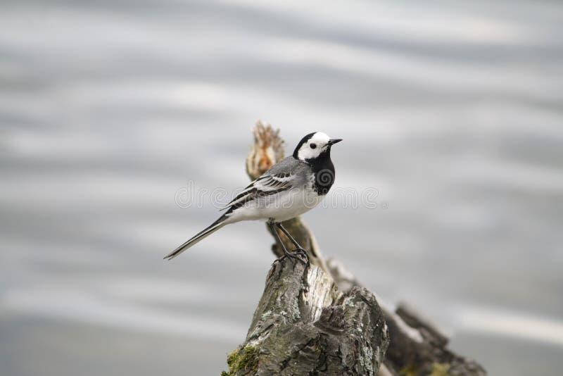 Fondo del agua del pájaro fotografía de archivo libre de regalías