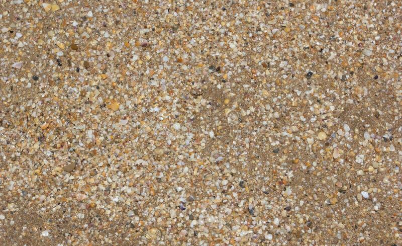Fondo del arena de mar y de las cáscaras foto de archivo libre de regalías