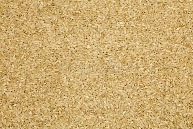 Fondo del arroz moreno del grano corto imágenes de archivo libres de regalías