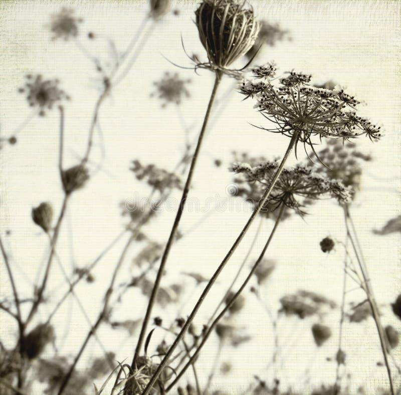 Fondo del arte del prado del verano imagen de archivo libre de regalías