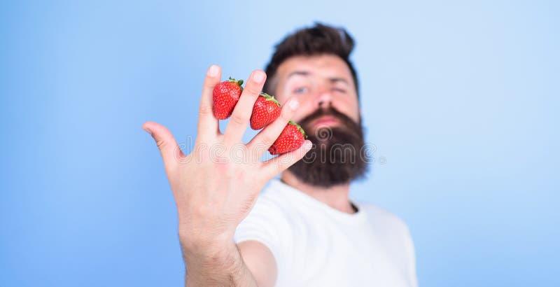 Fondo del azul de los fingeres de las fresas del inconformista de la barba del hombre A pesar de gusto dulce las bayas contienen  fotografía de archivo libre de regalías