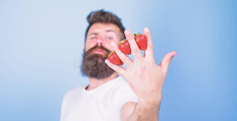 Fondo del azul de los fingeres de las fresas del inconformista de la barba del hombre A pesar de gusto dulce las bayas contienen  foto de archivo