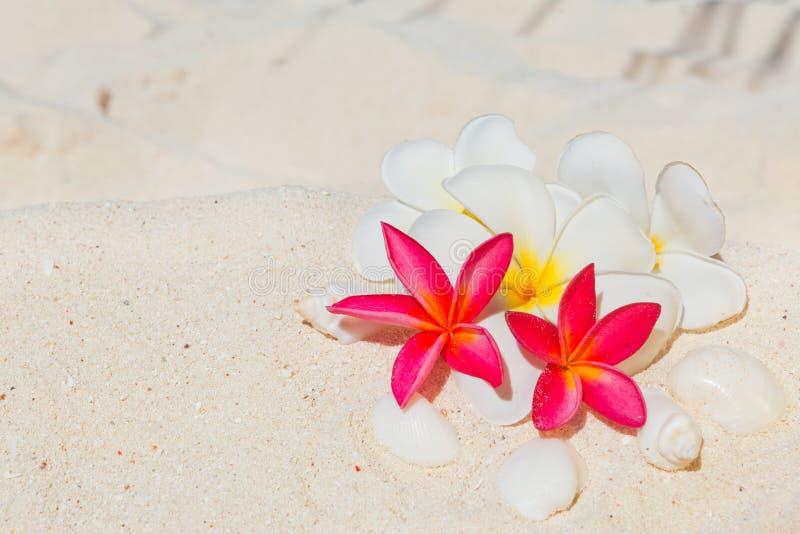 Fondo del balneario con la flor del frangipani fotografía de archivo