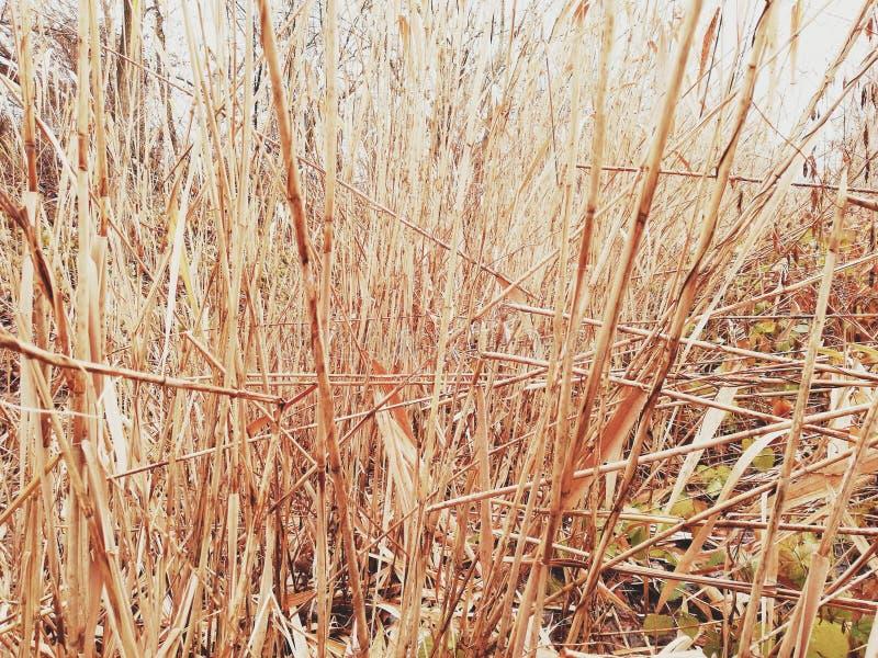 Fondo del bastón de bambú fotografía de archivo libre de regalías
