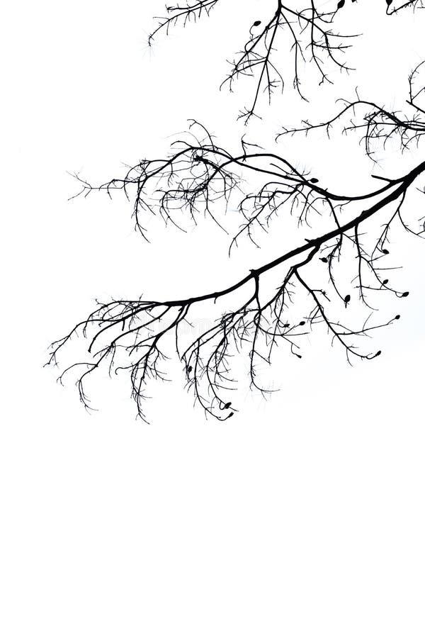 Fondo del blanco de la rama de la silueta imágenes de archivo libres de regalías