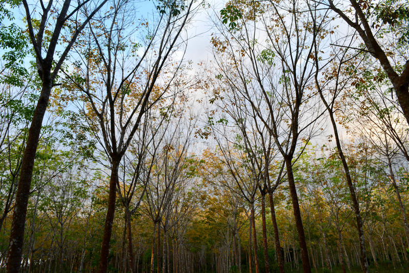 Fondo del bosque en la estación del otoño fotos de archivo