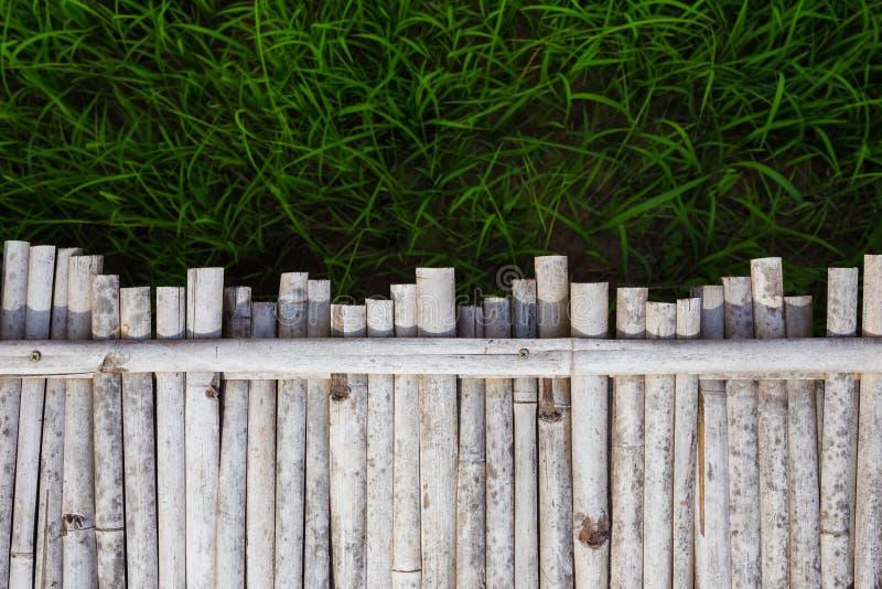 Fondo del campo del bambú y del arroz fotos de archivo libres de regalías
