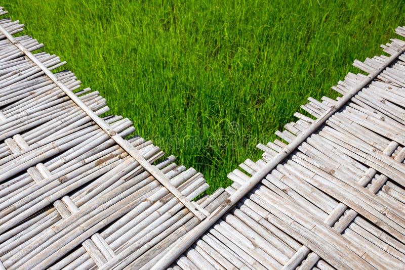 Fondo del campo del bambú y del arroz fotos de archivo