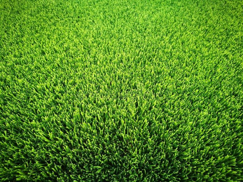 Fondo del campo de fútbol de la hierba verde fotografía de archivo