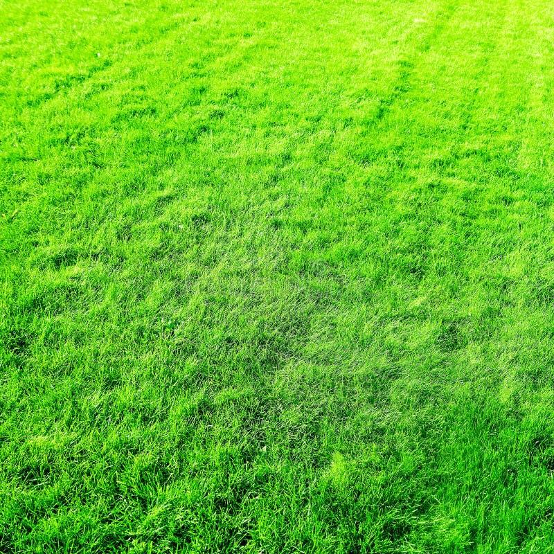 Fondo del campo de hierba, c?sped perfecto del patio trasero foto de archivo libre de regalías
