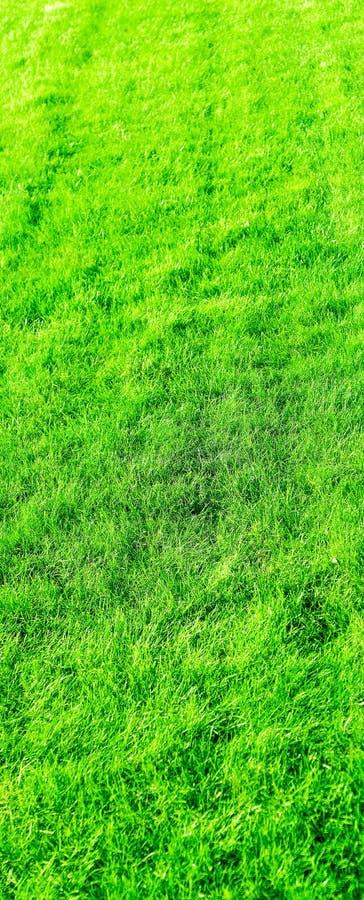 Fondo del campo de hierba, c?sped perfecto del patio trasero fotos de archivo libres de regalías
