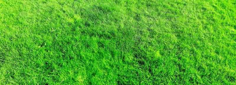 Fondo del campo de hierba, c?sped perfecto del patio trasero fotos de archivo