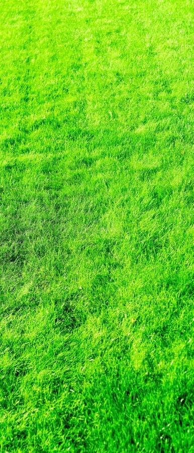 Fondo del campo de hierba, c?sped perfecto del patio trasero foto de archivo