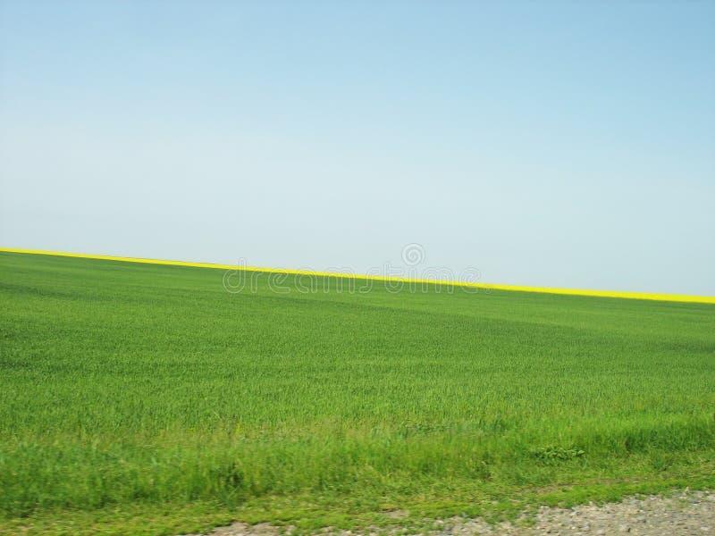 Fondo del campo verde y del cielo azul fotografía de archivo