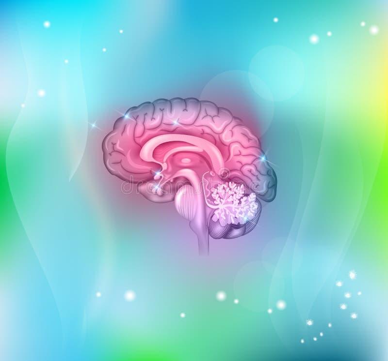 Fondo del cervello umano illustrazione di stock